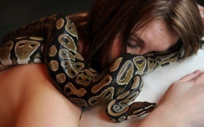 Woman Sleeps With Her Pet Snake Every Night… Then The Horrifying Truth Shocks Her