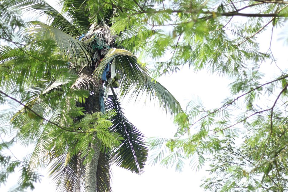 Man In Agusan Rescued After Living In Coconut Tree For 3 Years [VIDEO]