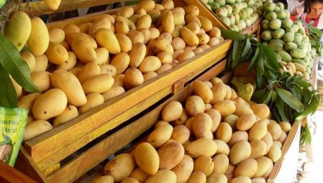 guimaras-mangoes