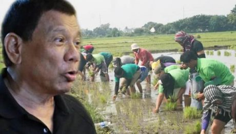 Duterte orders DA to buy all palay harvest