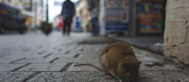 China hit by another deadly virus, Hanta-Virus