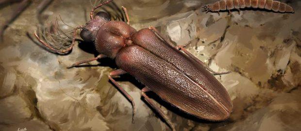 99-million-year-old beetle