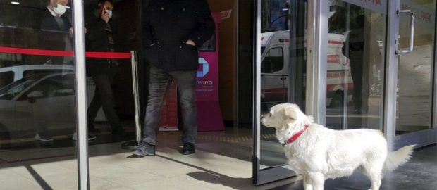 Patient Dog Patiently Waits For Days Outside Hospital