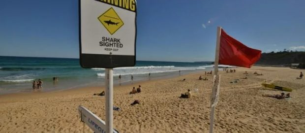 Australian man 'stole' tag from great white shark